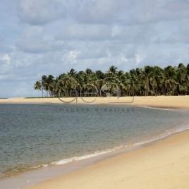 Praia do Gunga com coqueiros