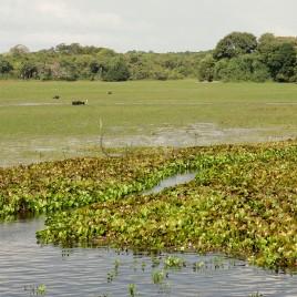 Área de Proteção Ambiental do Curiaú
