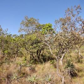Vegetação do Cerrado – Alto Paraíso