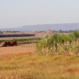 Colheita de Cana-de-açúcar – Morrinhos