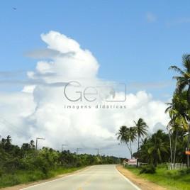 Estrada com coqueiros – Aracaju (SE)