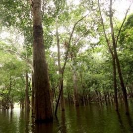 Igapó – Mata inundada na Cheia do rio Negro