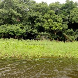 Mata ciliar na Floresta Amazônica