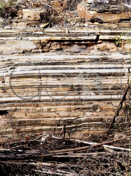 Sedimentar