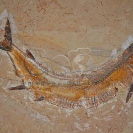 Fóssil de Peixe – Santana do Cariri (CE)