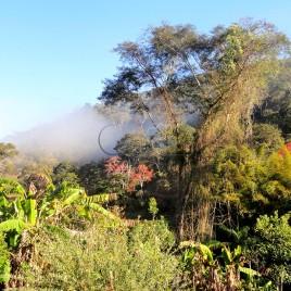 Vegetação – Sabinópolis (MG)
