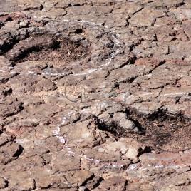 Vale dos Dinossauros – Pegadas