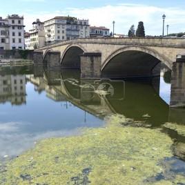Água eutrofizada no rio Arno