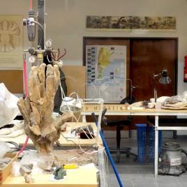 Museu Paleontológico, Argentina