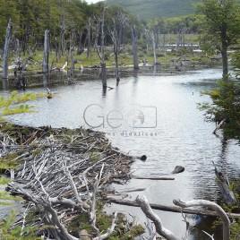 Desequilíbrio Ecológico – Ushuaia