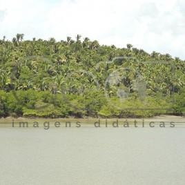 Manguezal e Mata dos Cocais,  Igarapé Cojupe