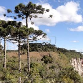 Araucárias – Canyon Itaimbezinho