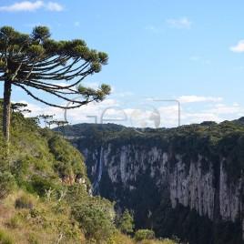 Araucária – Canyon Itaimbezinho