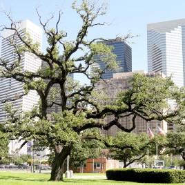Parque Urbano, Houston (EUA)