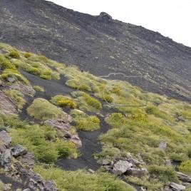 Vegetação no Vulcão Etna