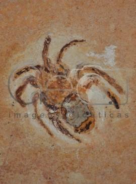 Fóssil