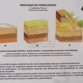 Processo de Fossilização – Santana do Cariri (CE)