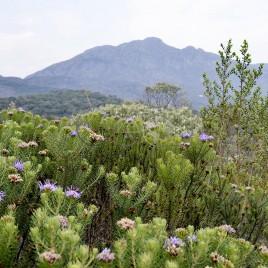 Vegetação e Serra do Caraça, MG