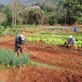 Trabalhadores Rurais – Santa Bárbara (MG)