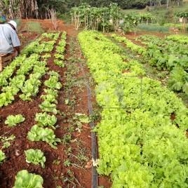 Trabalhador Rural – Santa Bárbara (MG)