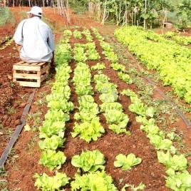 Trabalhador Rural – Sta. Bárbara (MG)