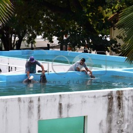 Peixe-Boi – CMA – Ilha de Itamaracá (PE)