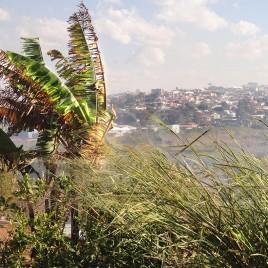 Vento em folhagens – Atibaia (SP)