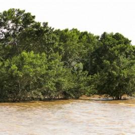 Manguezal encoberto na Maré Alta – Macapá