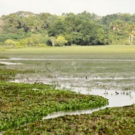 Banhado APA do Rio Curiaú – Macapá (AP)