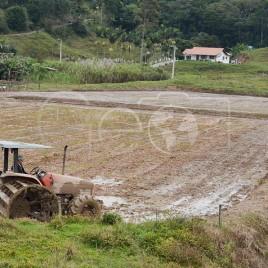 Cultivo de Arroz – Gaspar (SC)