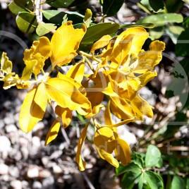 Flora – P. N. Chapada dos Veadeiros (GO)
