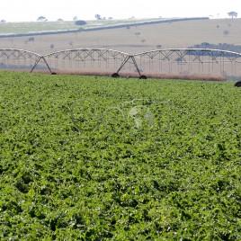 Sistema de Irrigação no cultivo de Soja (GO)