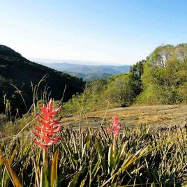 Bromélias, Monte Verde (MG)