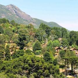 Araucárias, Monte Verde (MG)