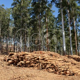 Toras de Madeira – Coroaci (MG)