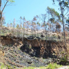 Área após Queimada – Mairiporã (SP)