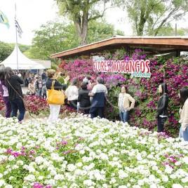 Festa Flores e Morangos – Atibaia (SP)
