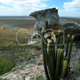 Parque Nacional Serra da Capivara (PI)
