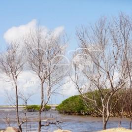 Área de manguezal – Aracaju (SE)
