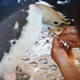 Uso de Oxitocina em Vaca – Sabinópolis