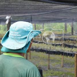 Trabalhador MST – Campo do Meio (MG)
