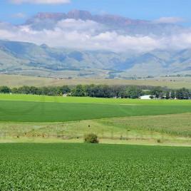 Plantação de Soja em KwaZulu-Natal
